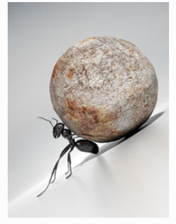 Coaching Page - ant pushing rock