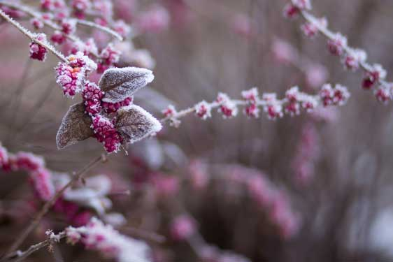 Frozen Flowers photo by freestocks on Unsplash